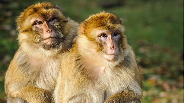 08_16_16_macaques.jpg